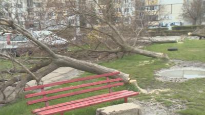 """Вандали изсичат дървета в столичния кв. """"Люлин"""""""