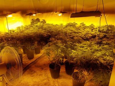 Разкриха домашна оранжерия за марихуана в Пловдив