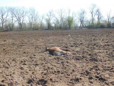 Намериха убити елени в Разградско