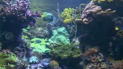 Ще отвори ли отново най-големият аквариум в Европа?