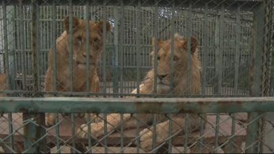 """Как живеят животните в хасковския зоокът """"Кенана"""""""