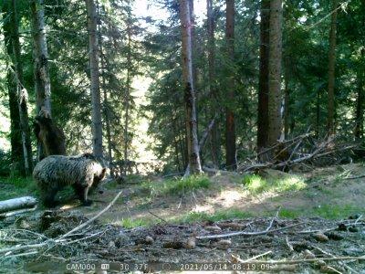 Учени заснеха четири мечки в Западните Родопи (Видео)