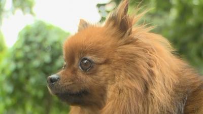 Преброяват домашните кучета в Благоевград