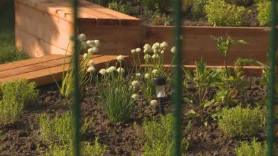 Създават екоградина в двора на столично училище