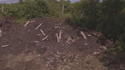 Животни са загробени незаконно край село Марково