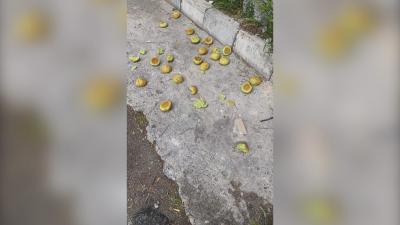 Зрителски сигнал: Разпръсната е отрова близо до детска градина в Бургас