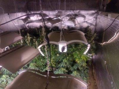 Разбиха оранжерия за марихуана в Разград (СНИМКИ)