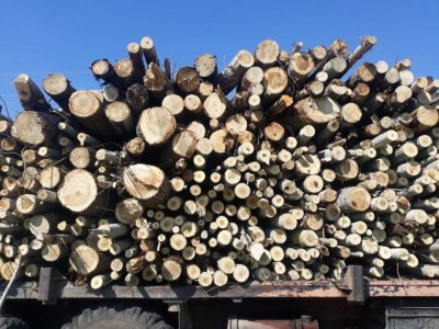 Спряха дейността в сечище на територията на ловно стопанство заради незаконна дървесина