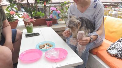 Сладолед за кучета изкушава домашните любимци в Несебър