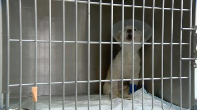 След репортажа на БНТ: Прокуратурата разследва случая с хвърленото от шестия етаж кученце в София
