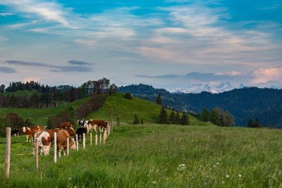 Прогнозни данни: Швейцария отхвърля забраната на синтетични пестициди