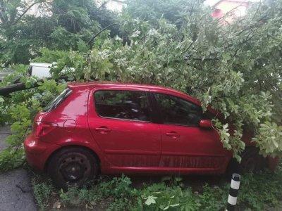 8 сигнала за паднали клони и дървета в София