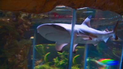 Две акули загинаха заради тесен аквариум в Природонаучния музей в Пловдив