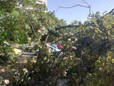 Над 20 сигнала за паднали дървета след бурята в Шумен
