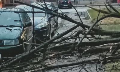 Пороен дъжд и силен вятър блокираха пътища във Врачанско снощи