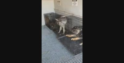4 кучета бяха открити затворени в метален контейнер в Самоков