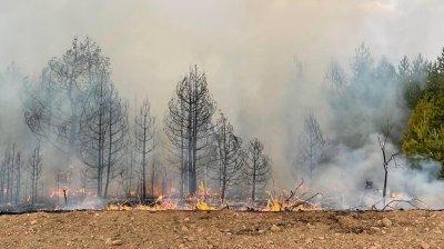 Няма опасност огънят в Северна Македония да прехвърли границата