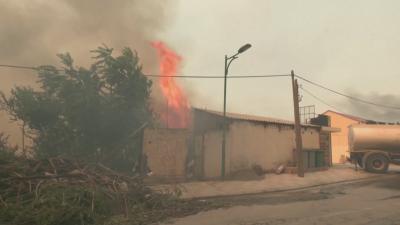 42 души са загинали при горски пожари в Алжир