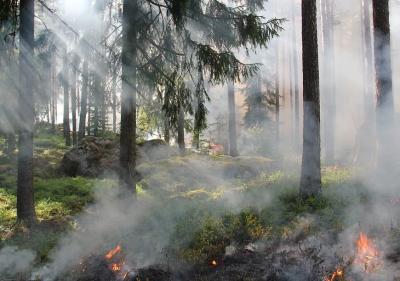 Голям горски пожар застрашава столицата на Черна гора