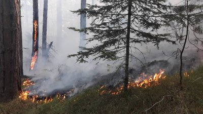 """Кугар"" гаси втори голям пожар, пламнал в Родопите"