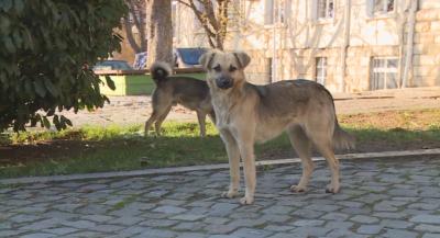 Глутници от бездомни кучета обикалят кварталите на Благоевград