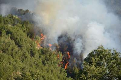 Над 19 000 горски пожара са регистрирани у нас до момента