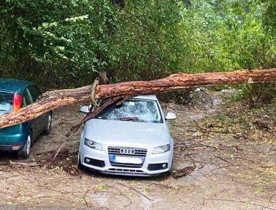 Силна буря в Ловеч нанесе щети и спря тока (СНИМКИ)