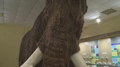 В естествен размер: Истински мамут в екомузея в Русе