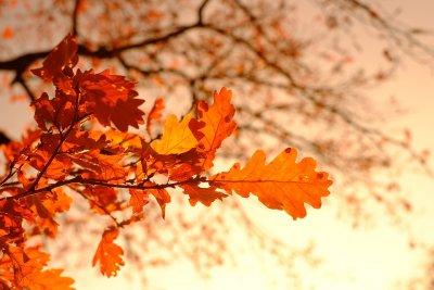 Хладно за сезона и в първия ден от октомври
