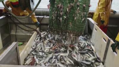 Риболовни квоти: Париж призова за европейски фронт срещу Лондон