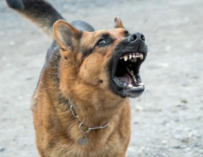 Община Русе ще плати 10 000 лв. обезщетение на пострадал при нападение от кучета