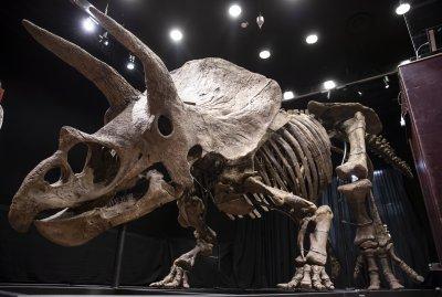 Продадоха скелета на най-големия тревопасен динозавър на търг в Париж