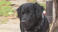 Намериха изгубено куче само за 24 часа