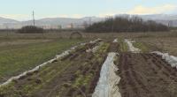 Биопроизводство - има ли почва у нас?