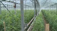 Ще поевтинеят ли българските оранжерийни зеленчуци?
