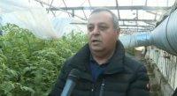 Български производители на зеленчуци се отказват да произвеждат заради ниските цени на вноса