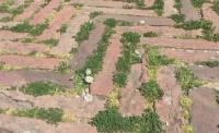 Трева и цветя поникнаха върху опустелите площади в Италия