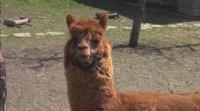 Бейби бум в зоопарка в Бургас