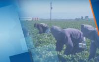 Германия и Испания отвориха границите си за сезонни работници