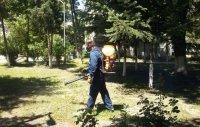 Във Варна започва пръскането срещу кърлежи