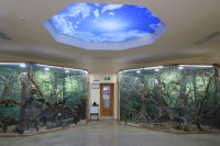Регионалният природонаучен музей в Пловдив с онлайн инициативи в условията на карантина