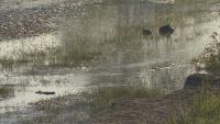 Проверяват замърсяването на Струма след скъсването на дигата в Перник
