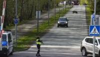 Издирват две диви мечета в Талин