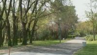 Пик на поленовите алергии в Пловдив