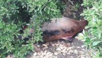Откриха мъртъв делфин на автобусна спирка във Варна