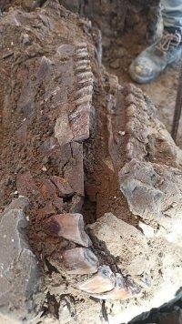 снимка 3 Останките на 60 мамута открити при строеж в столицата на Мексико