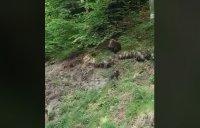 Уникални кадри: Мечка с малки мечета пресичат път под Рилския манастир
