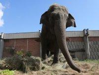 Слоницата Артайда получи торта за ЧРД - вижте дали й хареса