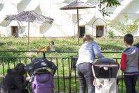 снимка 8 Зоопаркът – вход свободен. Тълпи от хора, подплашени животни
