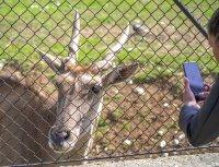снимка 7 Зоопаркът – вход свободен. Тълпи от хора, подплашени животни